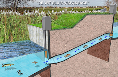 De Wit sluis-vispassage Cothen